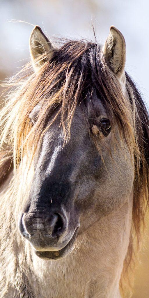 Tatzmania Pony